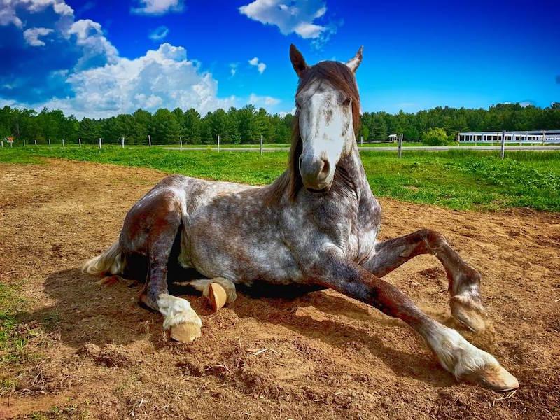 konie na koloniach mają spokojny charakter