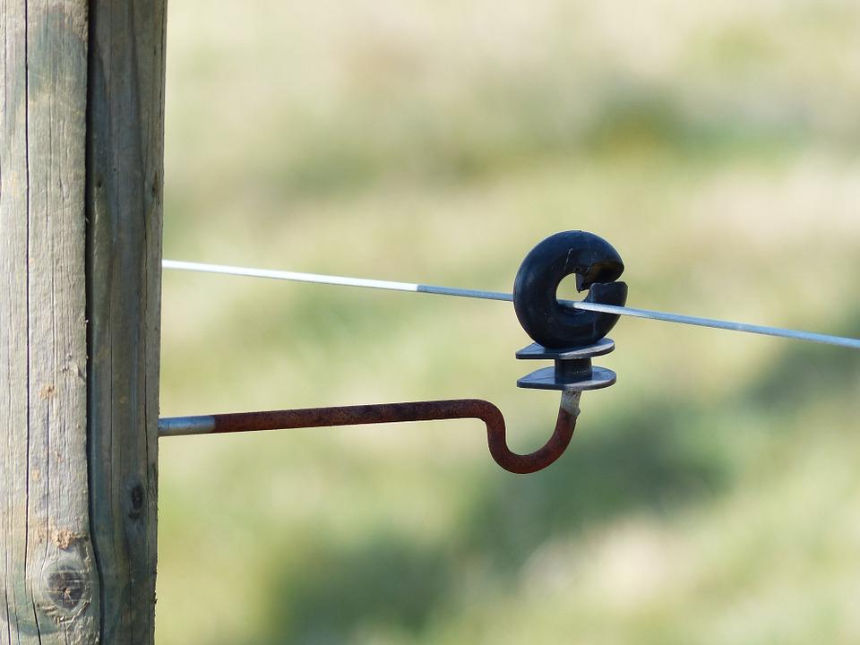 pastuch elektryczny dla bydła